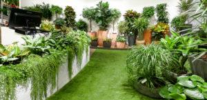 Красивые домашние растения