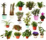 Виды комнатных растений